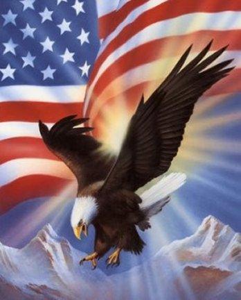 Bald Eagle on Stars & Stripes