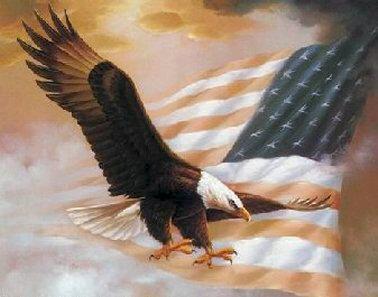 Bald Eagle & Banner