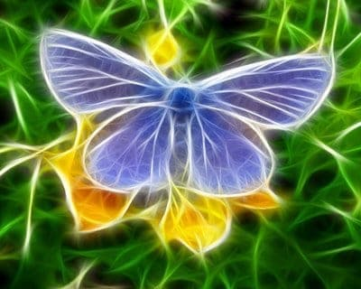 Virtual Butterfly